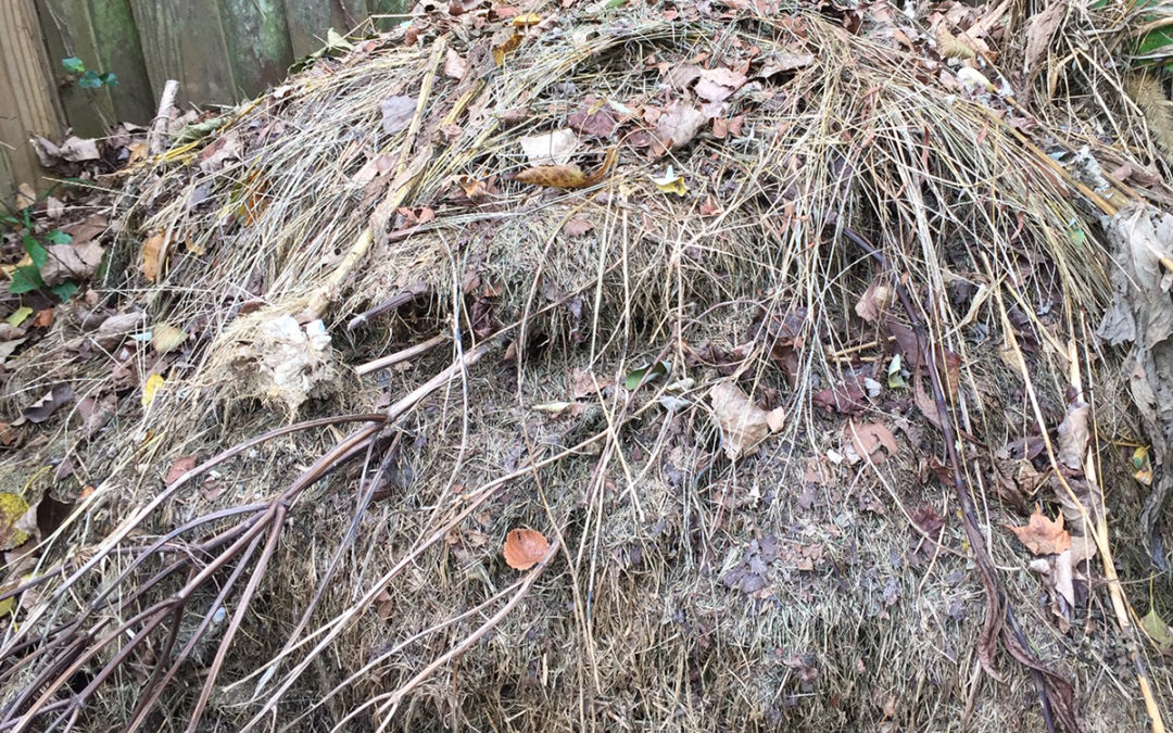 Composting Is Something You Can Do For People and Our Common Home