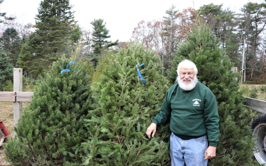 Real vs. Artificial Christmas Trees: Which is 'Greener?'