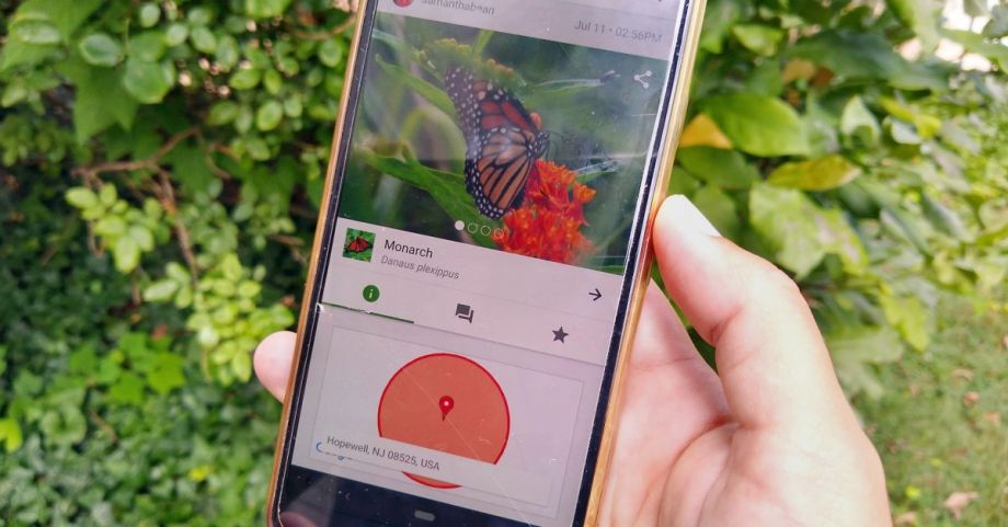 Citizen Science Conserves New Jersey Butterflies — and Keeps People Entertained During Quarantine