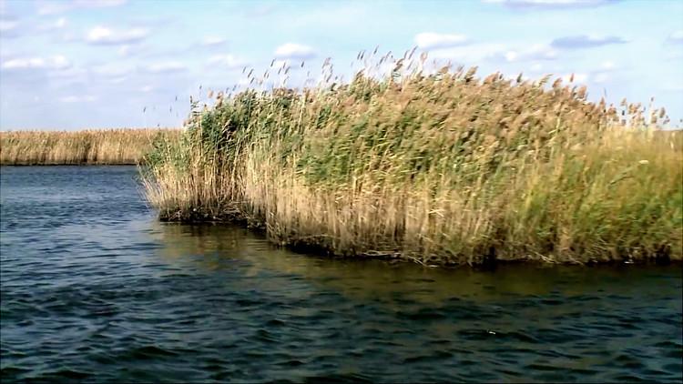 Meadowlands Mayors Link Restored Wetlands to Flood Mitigation